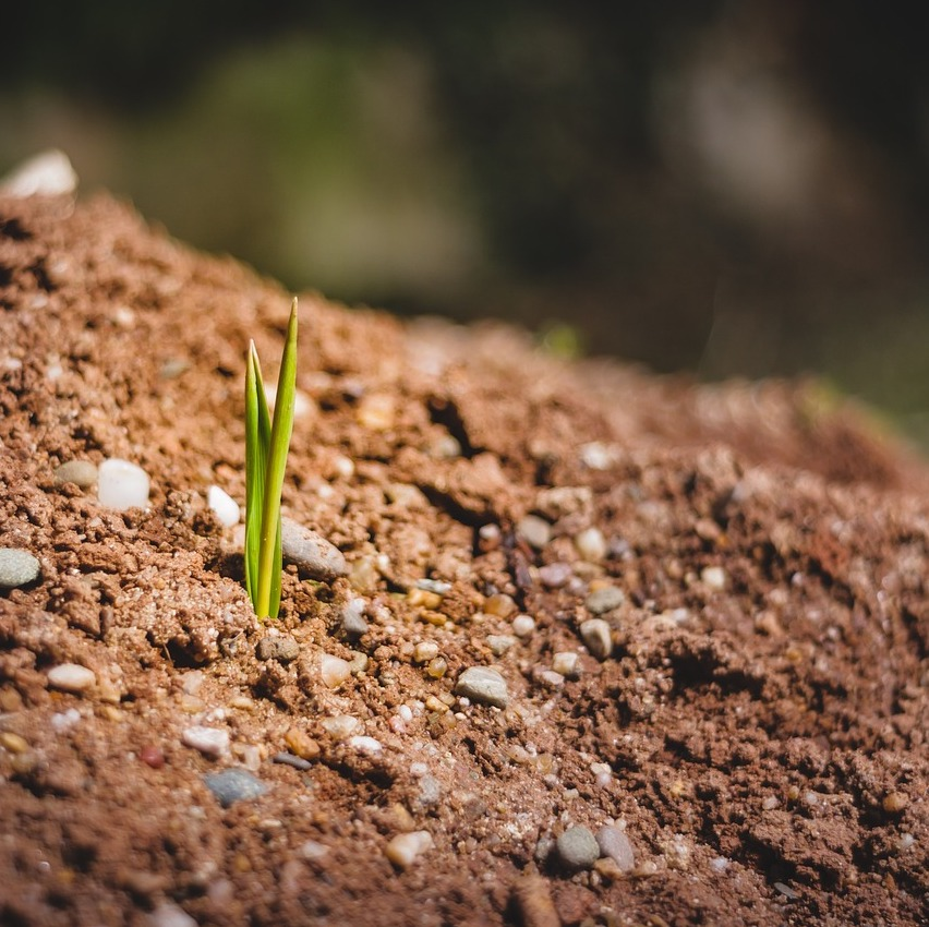 A seedling growing from dirt